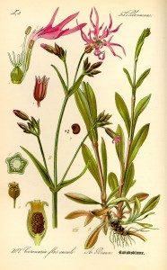 goricvet