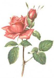 roza-krimskaya
